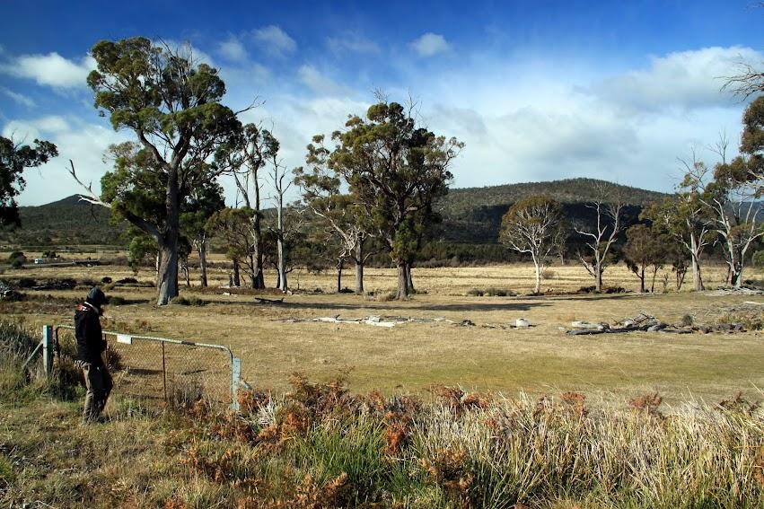 bush Tasman