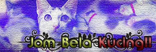 bela kucing