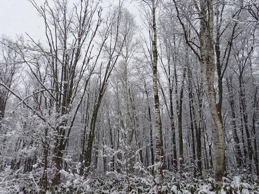 樹木も雪に