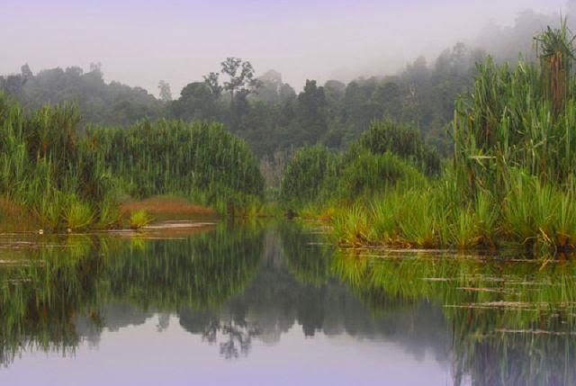 Tasik-Chini-Lake