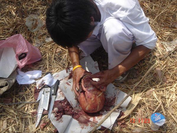 Κανίβαλοι στην Ταϋλάνδη μαγείρεύουν άνθρωπο (Σοκαριστικές εικόνες αυστηρά άνω των 18)