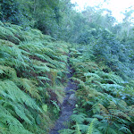 Ferns surrounding Finchs Line road (163768)