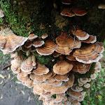 Fungus on tree (56384)
