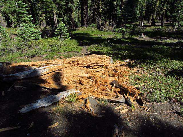 fallen rotten log