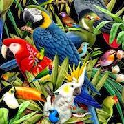 к чему снятся попугаи?