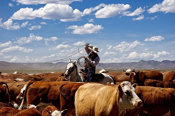 Marchiatura del bestiame