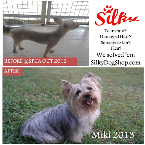 dog shampoo before and after we use on Miki our silky terrier