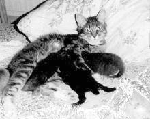 mother cat and newborn kittens