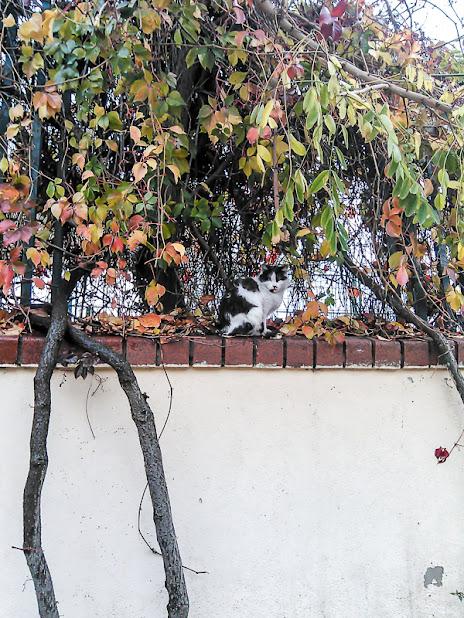 В Аргентину из снегов Сибири.