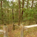 Start to Muirs Walking Track near Cooranbong (320048)