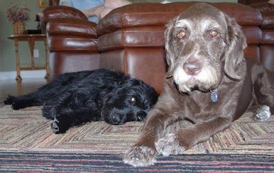 Wrigley and Charlie
