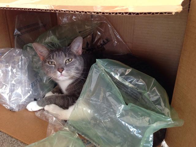 box kitten