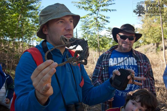 Explicación Rafael Almena sobre la riqueza biológica del entorno. En la mano los restos de un lagarto ocelado hallados junto al canal