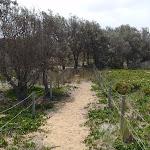 Track ontop of dunes (107170)