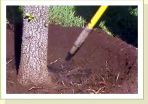 air spade tree root