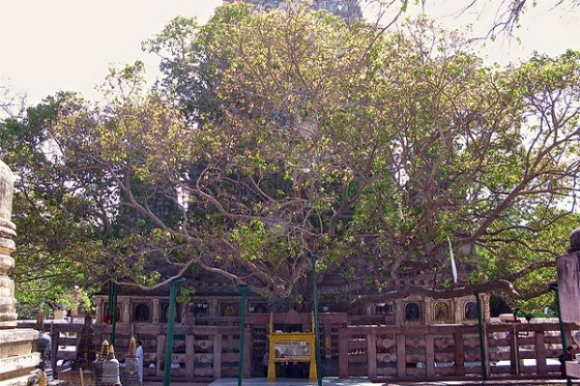 <i><b>pohon terbesar</b></i>