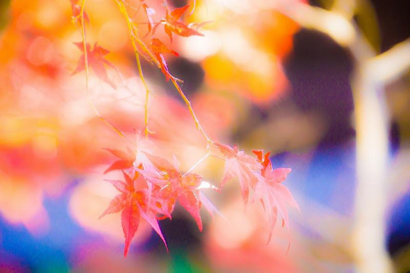 京都 永観堂 紅葉 写真10