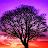 Helana Eagle avatar image