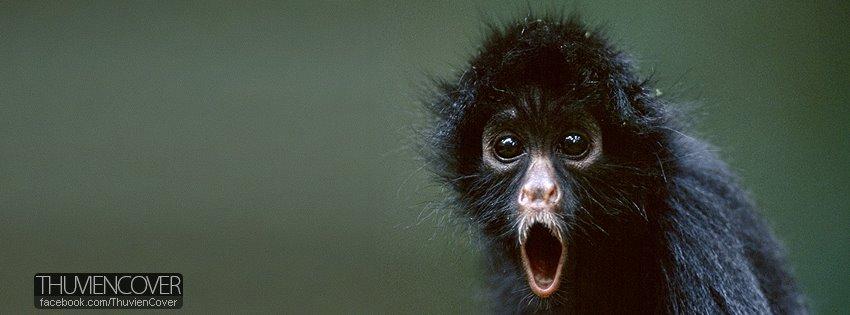 Ảnh bìa chú khỉ