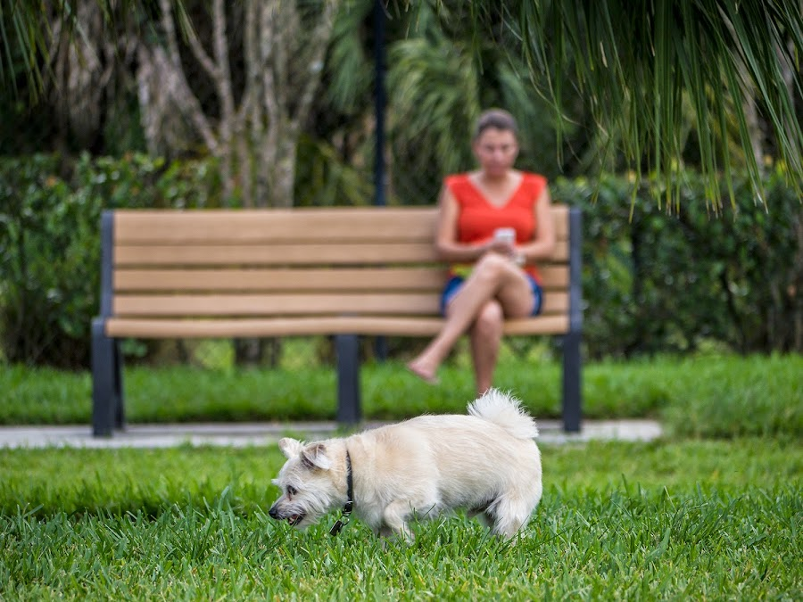 Barkland Dog Park