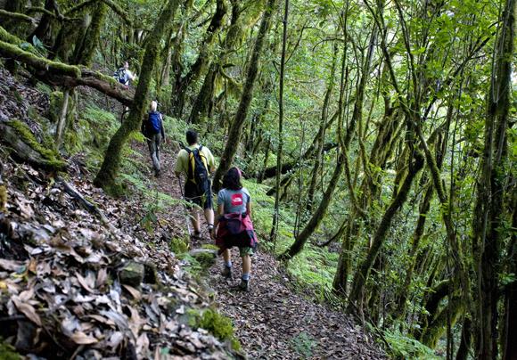 Bosque del Cedro. Parque Nacional de Garajonay. La Gomera. Islas Canarias