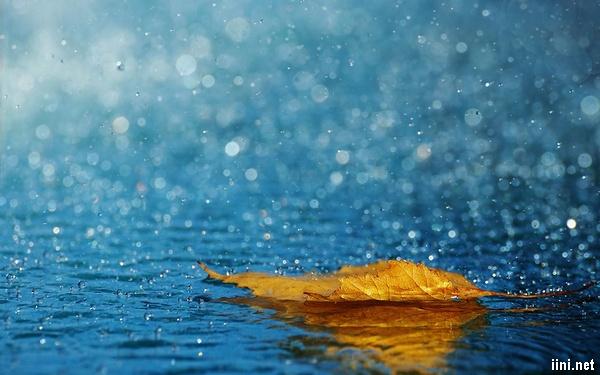 ảnh chiếc lá trong cơn mưa Thu