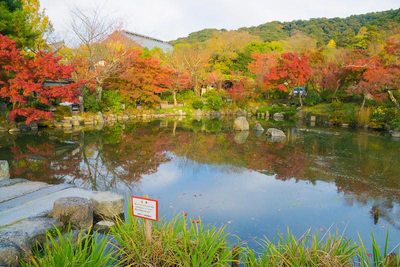 京都 紅葉 円山公園 写真1