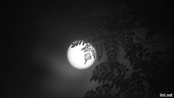 ảnh ánh trăng lấp ló sau tán cây