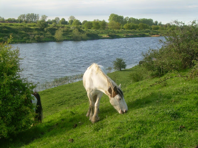 Horses on the Ouse channel