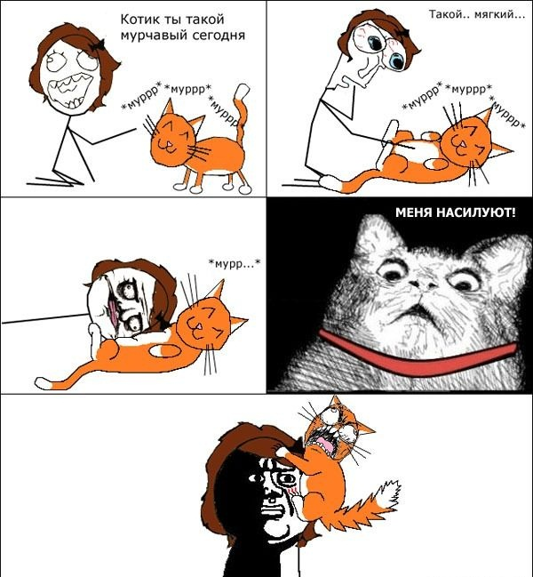 Картинки, картинки мемы приколы про котов