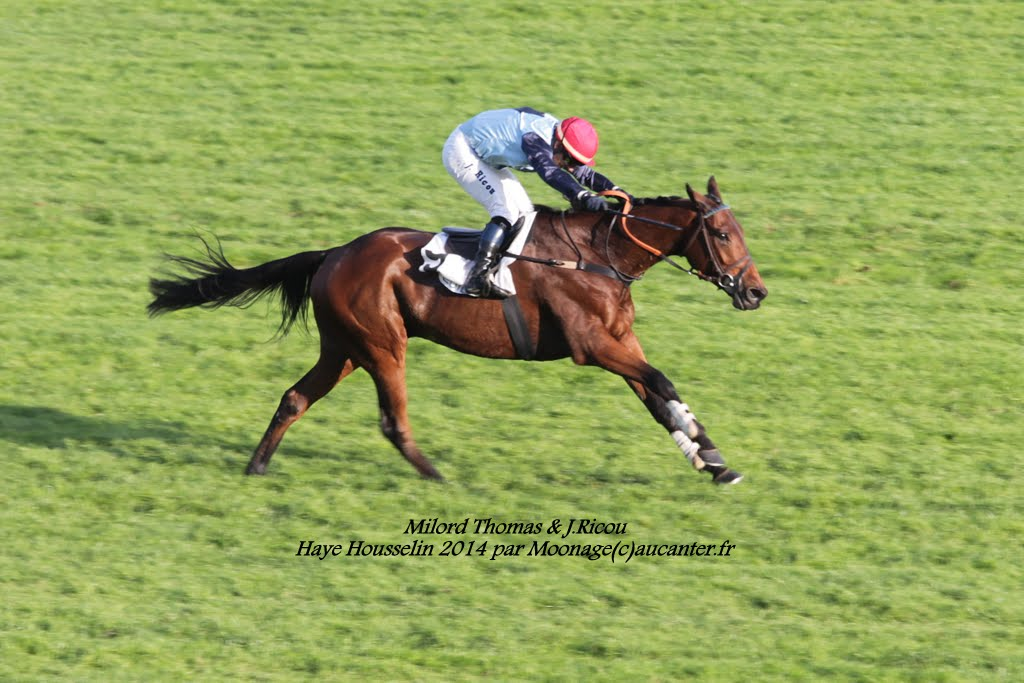 Photos Auteuil 2-11-2014 (48h de l'obstacle) IMG_5656