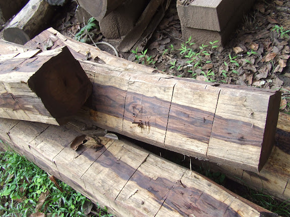 ไม้พะยูงนำมาซึ่งโชคลาภหรือการสูญเสีย