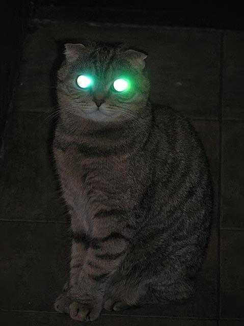 Картинки по запросу глаза кошки в темноте фото