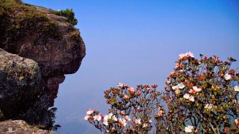 hoa do quyen pha luong pys travel005 Mộc Châu tháng Tư   Hoa đỗ quyên nở rộ Pha Luông