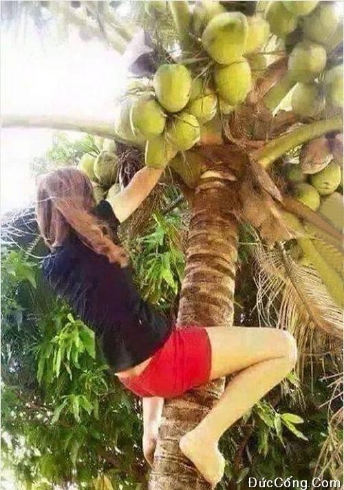 Ảnh con gái mặc quần ngắn leo cây dừa