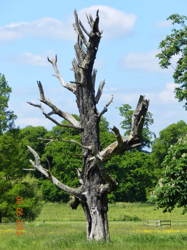 Nature in , United Kingdom, visiting things to do in United Kingdom, Travel Blog, Share my Trip