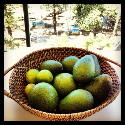 Blogging from the beach, Natasha in Oz, avocados image