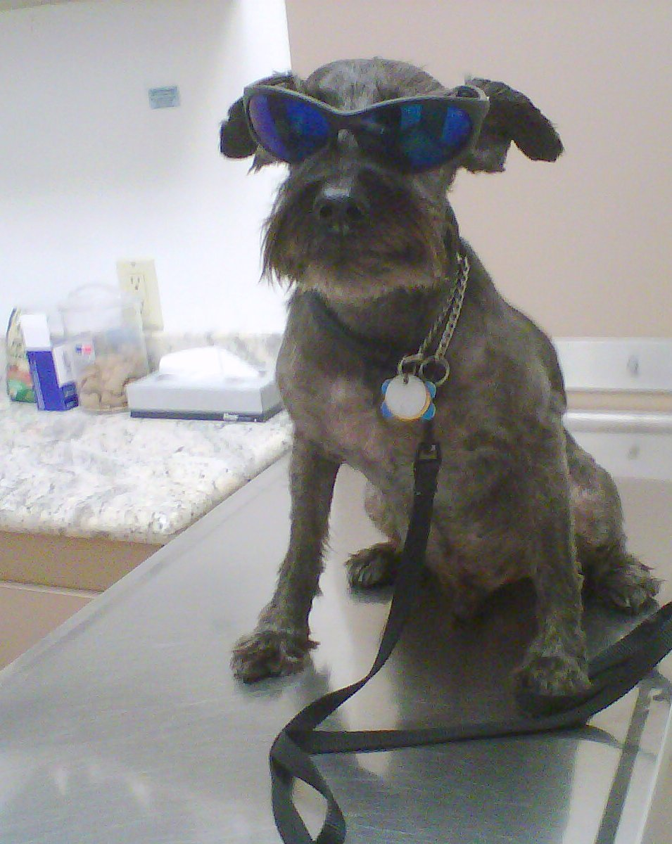 Fritz 16 years old at the Vet getting some Lumps checked out.