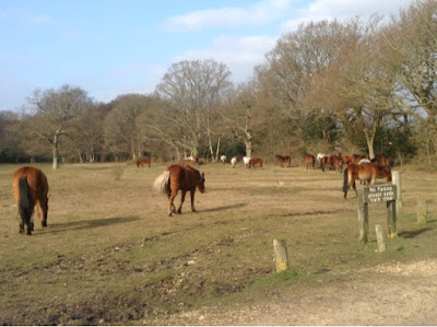 horses and ponies in the New Forest