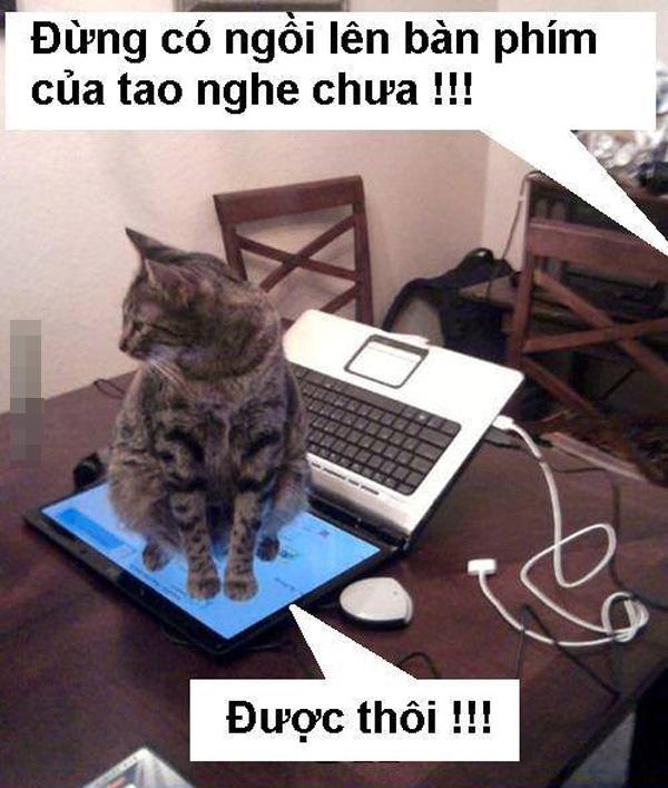 Ảnh chế vui Mèo ngồi trên màn hình laptop