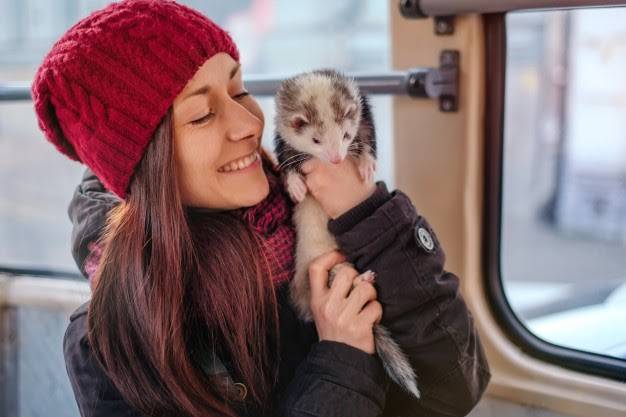woman holding a ferret on her arm