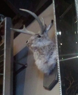 Jackalope on the wall -- love it!
