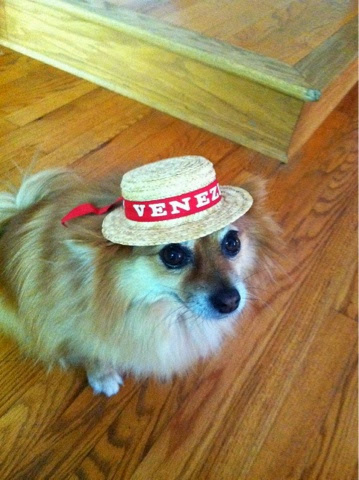 Ginger the Pomeranian with Venezia hat