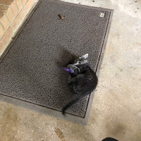 Miranda Howell's avatar