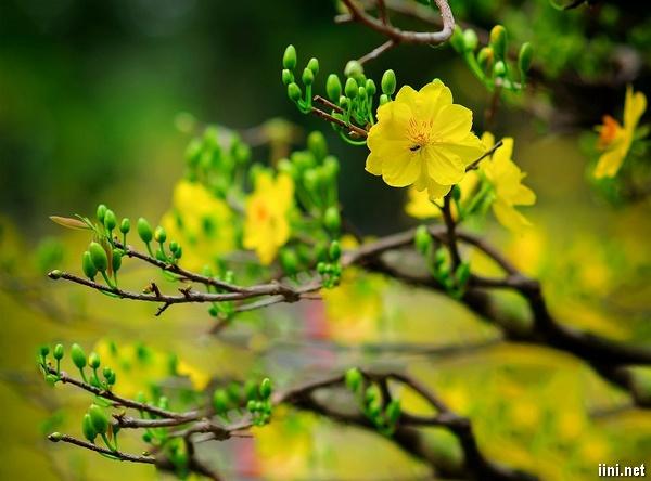 Thơ Xuân 2018 hay, chùm thơ tình Xuân với nhiều cung bậc cảm xúc