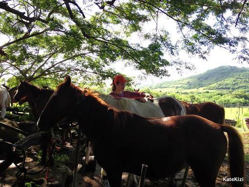 Вначале - знакомство с лошадьми, налаживание контакта и экипировка
