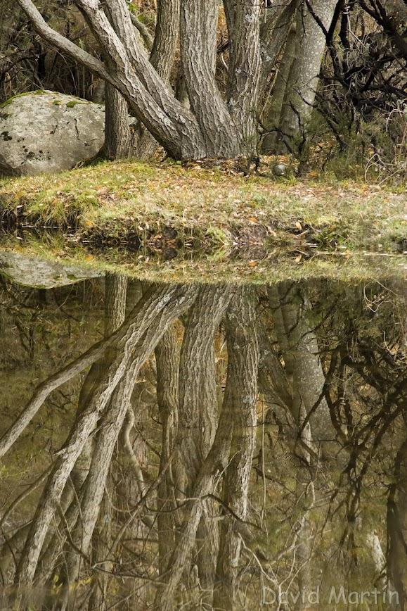 manatus foto blog reflejo de árbol