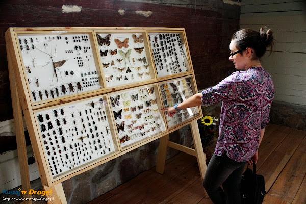 kaszuby Sierakowice - drewniany kościół - wystawa motyli