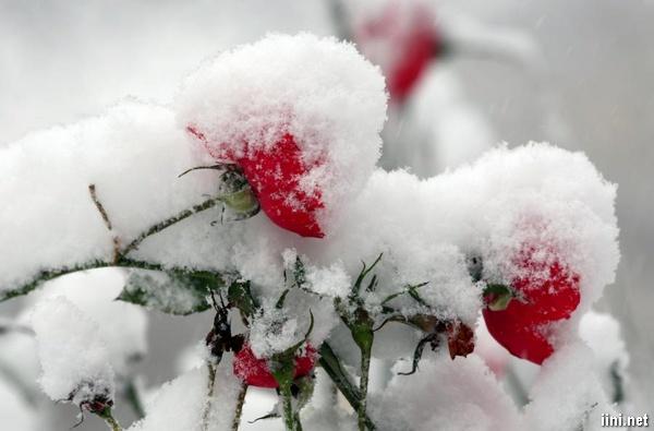 thơ ngũ ngôn viết về mùa đông