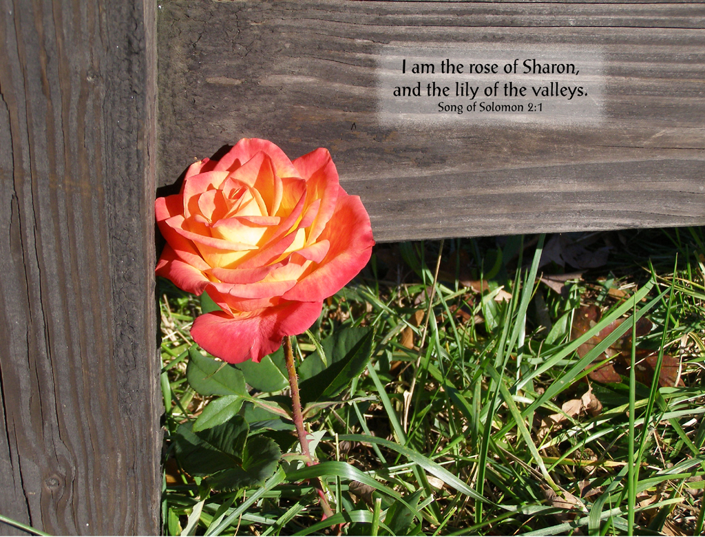 Apostolic Revelation Who Is The Rose Of Sharon And The Lily Of